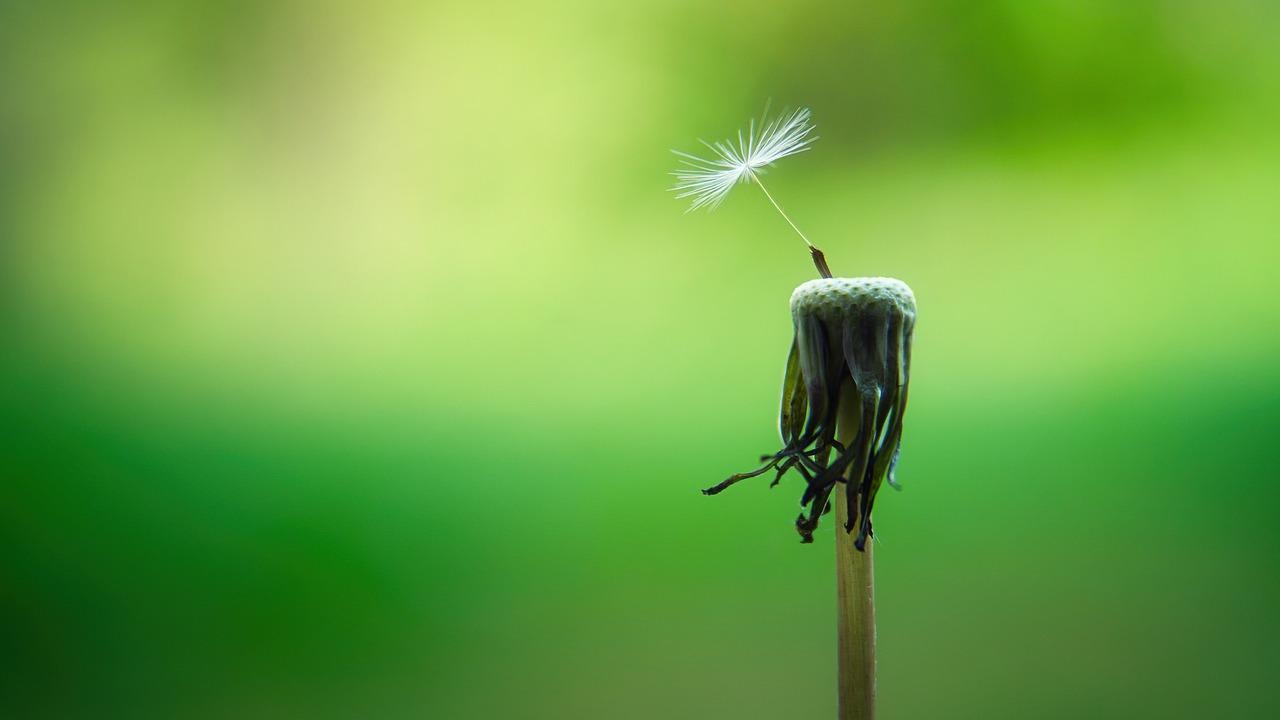 Ein Symbolbild für Hoffnung